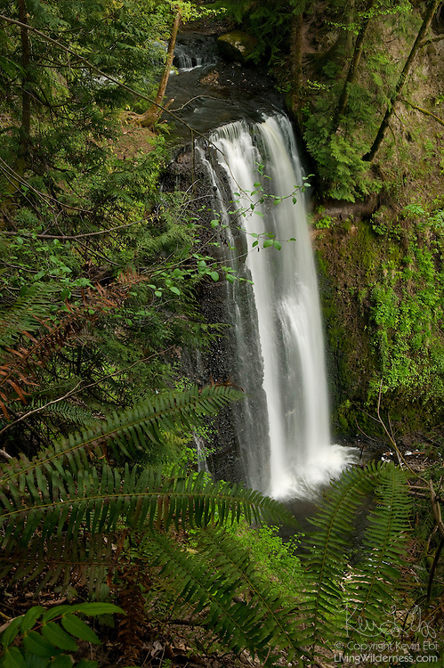 Victor Falls, located near Bonney Lake, Washington, plunges more than a hundred feet into a gorge that borders Fennel Creek..