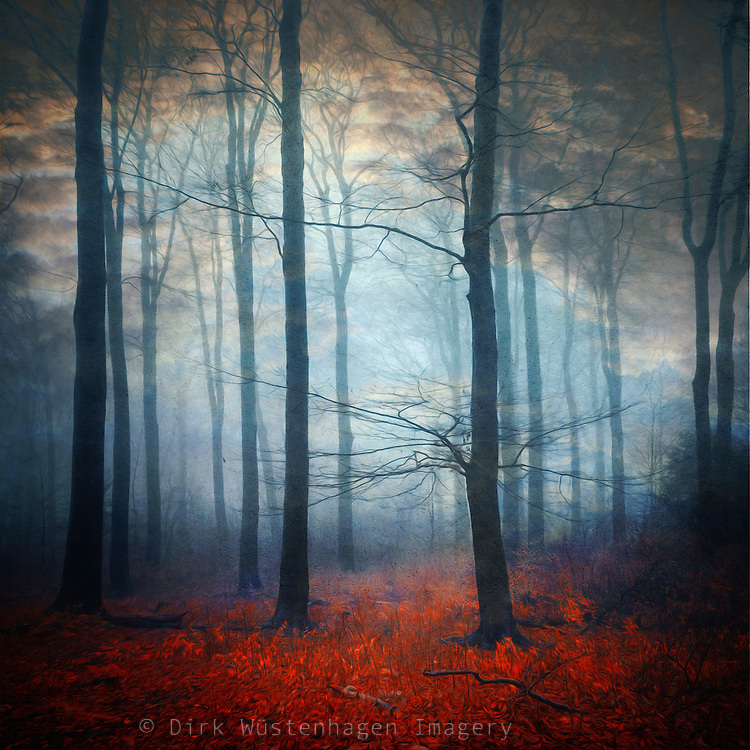 Mysterious dreamlike  forest scenery - manipulated photograph<br /> <br /> Prints: http://www.500pxart.com/photo/56630114
