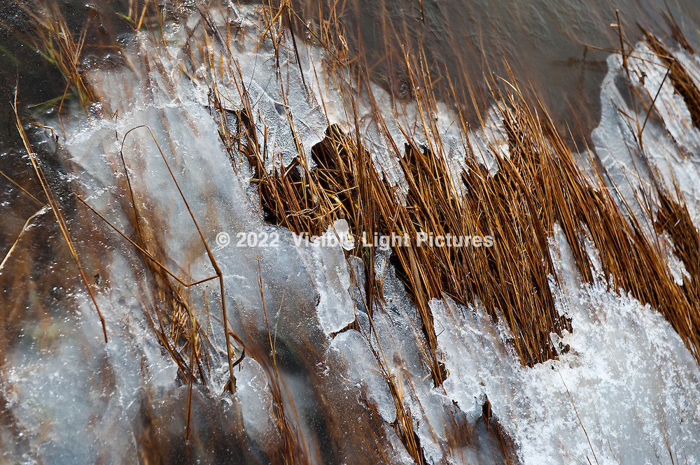 Frozen marsh grasses near the shoreline in Brewster, MA