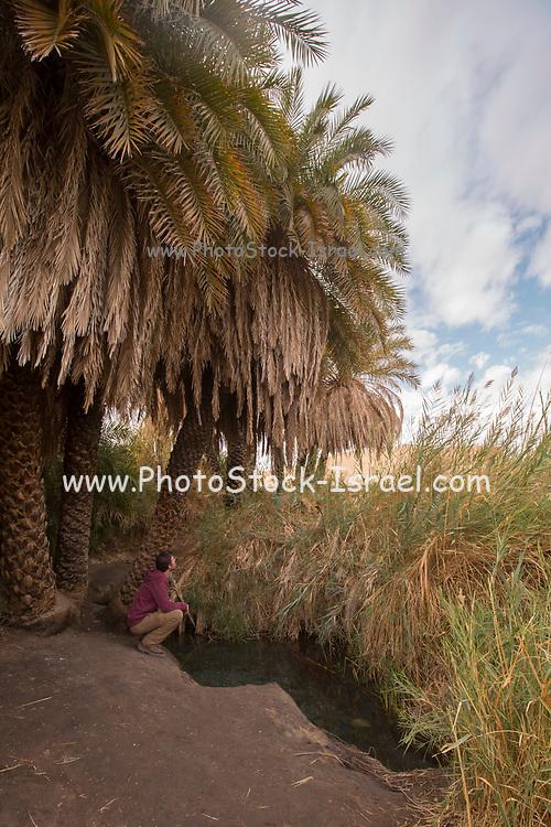 Ein Plutit Desert Oasis in the Judea Desert, Israel