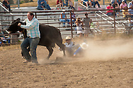 Wilsall Ranch Rodeo, Montana, Wild Cow Milking, Cleve Swandel, Kurt Mraz, Cody Wilsey, Lazy SR Ranch Team..