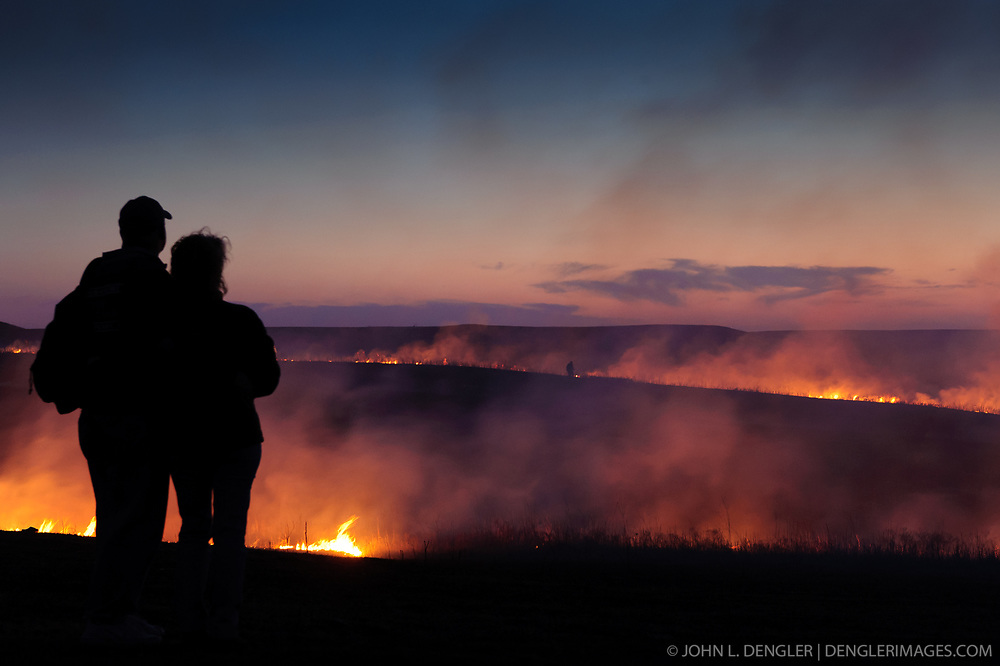 "Unidentified participants at the ""Flames in the Flint Hills"" observe the burning prairie at the Flying W Ranch near Clements, Kansas. This agritourism event allows ranch guests to take part in lighting the prescribed burns. Prairie grasses in the Kansas Flint Hills are intentionally burned by land mangers and cattle ranchers in the spring to prepare the land for cattle grazing and help maintain a healthy tallgrass prairie ecosystem. The burning is also an effective way of controlling invasive plants and trees. The prairie grassland is burned when the soil is moist but grasses are dry. This allows the deep roots of the grasses to survive and the burned grasses on the soil surface return as nutrients to the soil. These nutrients allow for the rapid growth of new grass. After approximately two weeks of burning, new grass emerges. Less than four percent of the original 140 million acres of tallgrass prairie remains in North America. Most of the remaining tallgrass prairie is in the Flint Hills in Kansas."