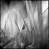 Grass 2013