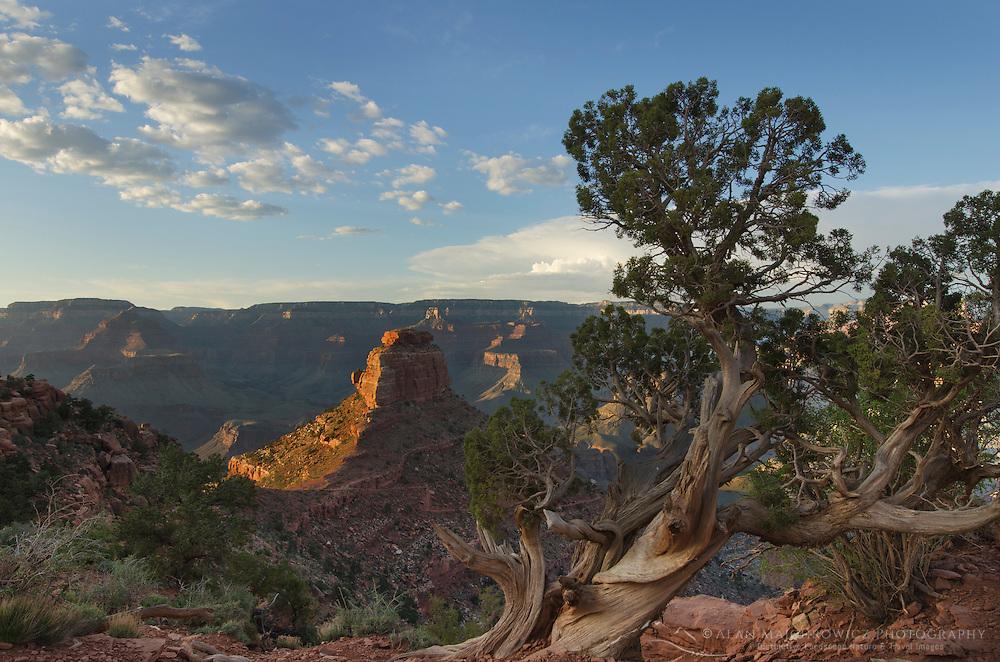Cedar Ridge, Grand Canyon National Park