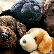 WA11687-00...WASHINGTON - Stuffed animals.