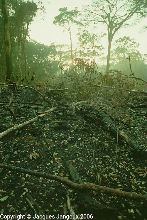 Recently burned slash and burn field that will be planted with rice by Dan synonym Yacouba or Yakuba villagers in Ivory Coast, West Africa.