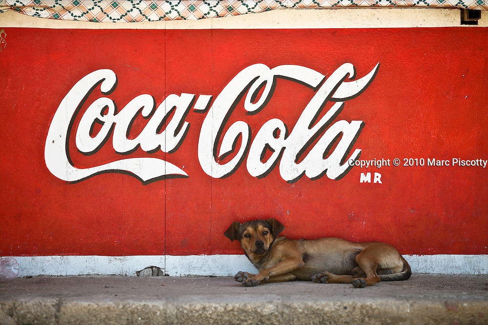 """SHOT 1/22/10 11:32:36 AM - A street dog sleeps under a Coca Cola sign in a street stall one afternoon in Sayulita, Mexico. Stray dogs can be a problem in some Mexican towns and cities but Sayulita has managed to spay and neuter a large number of the strays on the street keeping populations in check. Sayulita is a small fishing village about 25 miles north of downtown Puerto Vallarta in the state of Nayarit, Mexico, with a population of approximately 4,000. Known for its consistent river mouth surf break, roving surfers """"discovered"""" Sayulita in the late 60's with the construction of Mexican Highway 200. In recent years, it has become increasingly popular as a holiday and vacation destination, especially with surfing enthusiasts and American and Canadian tourists. (Photo by Marc Piscotty / © 2009)"""