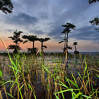 Marsh foliage shines at Blue Cypress Lake, Florida