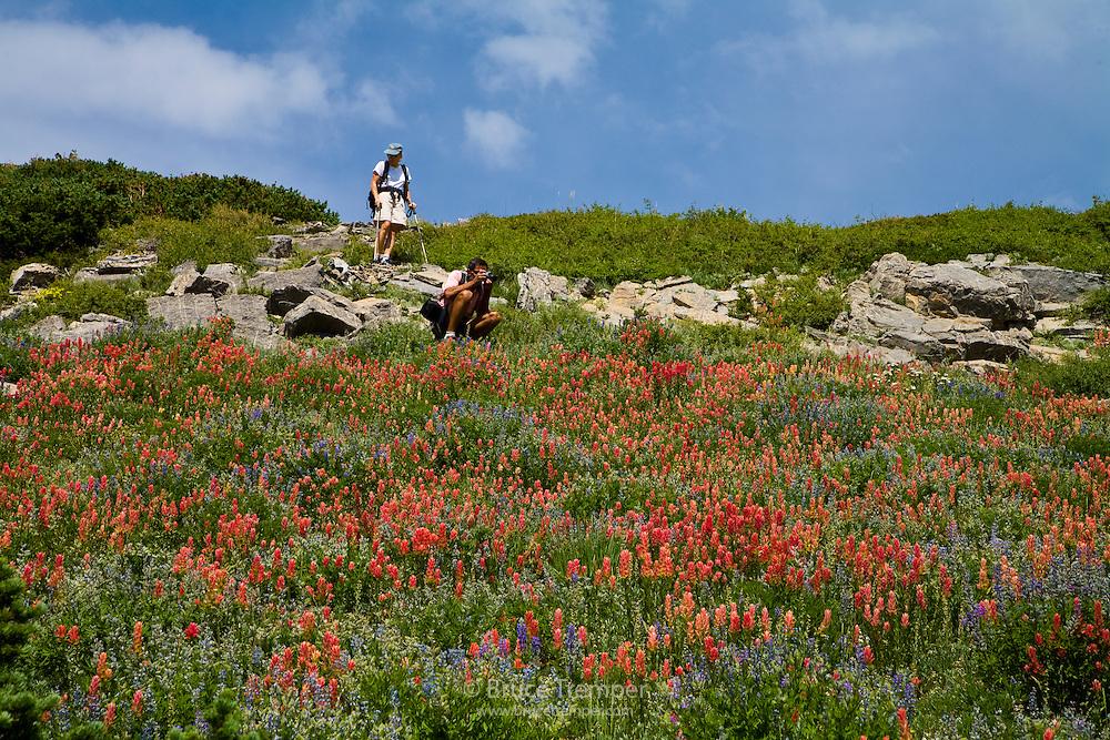 Two hikers enjoy the indian paintbrush, Alta, Utah