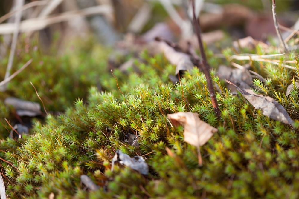 A carpet of moss in a bog