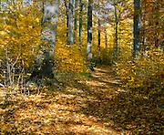 BB07026-03...MICHIGAN - Trail through a hardwood forest at Warren Woods State Park.