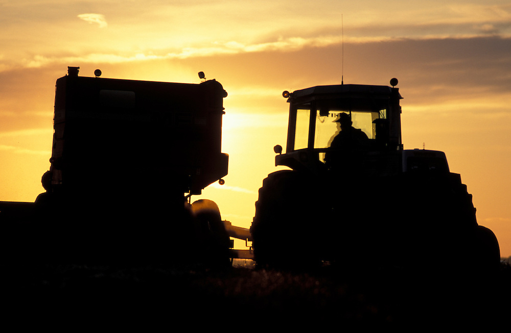Canada, Saskatchewan, (MR) Wheat harvest continues after sunset at Dale and Judy Bohn's farm in Ebenezar