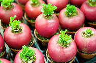 Giant radishes for sale at the Taipei Flower Market in Taipei, Taiwan.