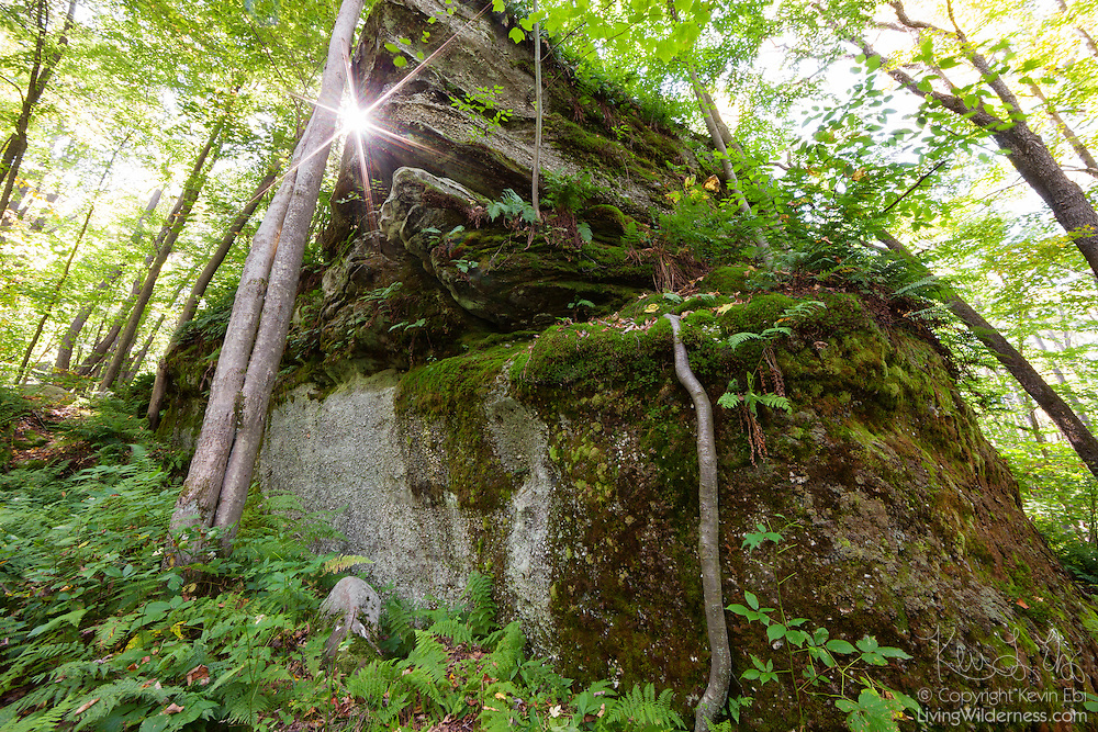 The sun shines between a tree and a large rock outcropping in the Minister Valley area of the Allegheny National Forest in Warren County, Pennsylvania. The Allegheny Front was once part of a vast delta and layers of a hard, sandstone congolomerate were deposited. Between 250 and 320 million years ago, the Allegheny Front was lifted, forming hills and mountains. Over time, erosion exposed, split, or dislodged and moved the former sedimentary rock, resulting in large rock outcroppings.