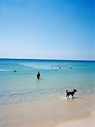 Swimmers and Thai beach dog enjoy the sea on Karon Beach