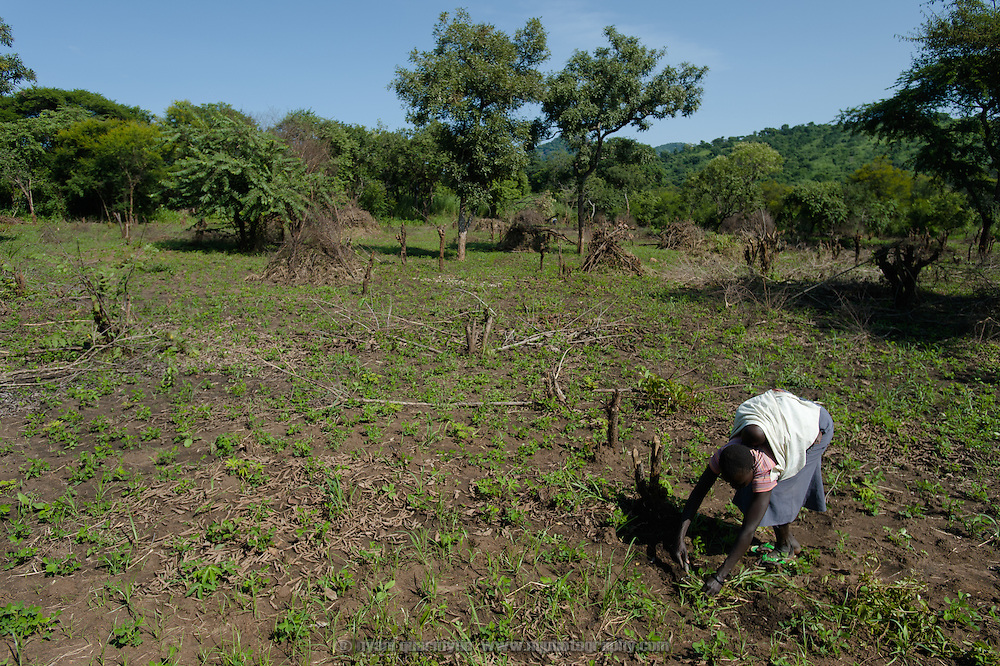 Cecilia Amal on her farm in Imurok Payam in Eastern Equatoria, South Sudan on 9 August 2014. Cecilia's husband is a government soldier, and has been away for about a year. Having come to her current home after having had to flee fighting in Juba in December 2013, she says she receives no support from him—locals say that soldiers frequently go unpaid for long periods of time. Facing acute food insecurity, Cecilia received seed to plant from Plan International.