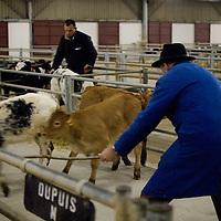 Marché aux bestiaux de Lezay
