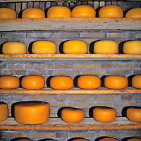 Europe, The Netherlands. Aging Cheese at the Cheese Factory near Volendam.