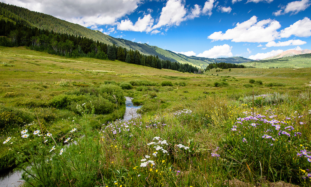 Beautiful wild flowers decorate the mountain slopes near Crested Butte town, Colorado.