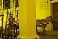 Nightlife in Cartagena.Santo Domingo Square. Outdoor cafes and restaurants.