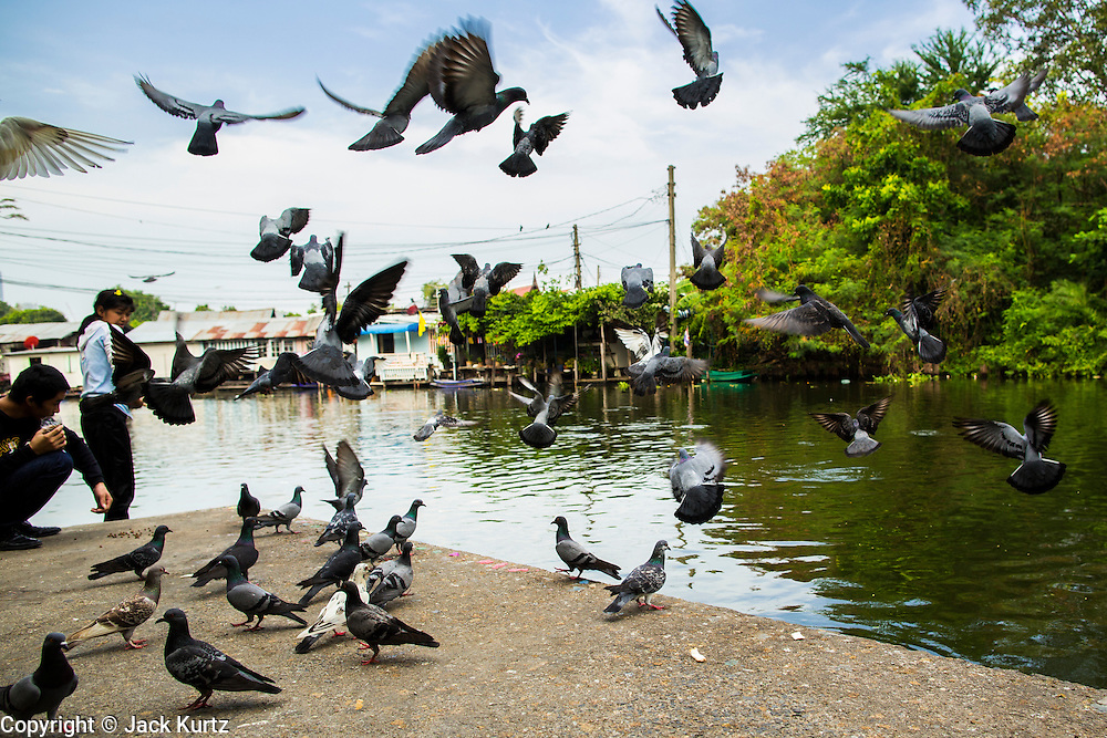 04 JANUARY 2012 - BANGKOK, THAILAND:  Pigeons take off after being fed at Wat Mahabut in eastern Bangkok. The temple was built in 1762 and predates the founding of the city of Bangkok. Just a few minutes from downtown Bangkok, the neighborhoods around Wat Mahabut are interlaced with canals and still resemble the Bangkok of 60 years ago. Wat Mahabut is a large temple off Sukhumvit Soi 77. The temple is the site of many shrines to Thai ghosts. Many fortune tellers also work on the temple's grounds.   PHOTO BY JACK KURTZ