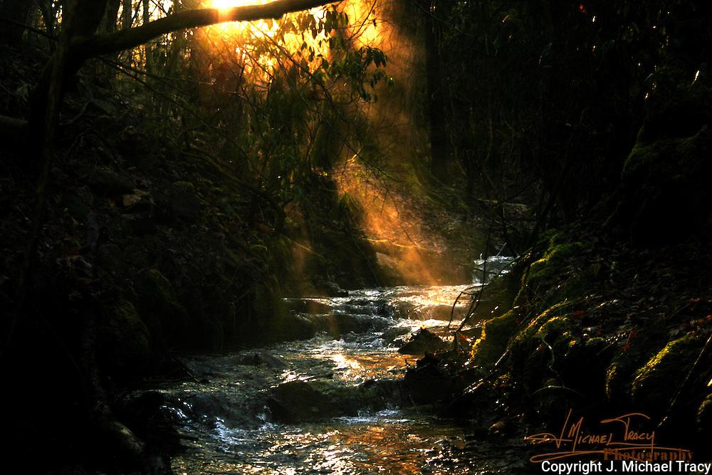 A BlueRidge Georgia Mountain stream. A winter sunrise.