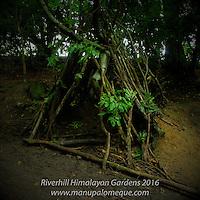 The Dens of Riverhill