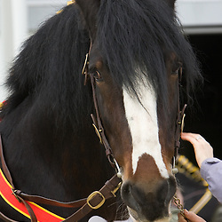 Mr O C Whittaker's  Bay Stallion  Knutsford Sir Charles   f 2004<br /> s   Knutsford Commander<br /> d   Ballafayle Sabrina<br /> Bred by owner