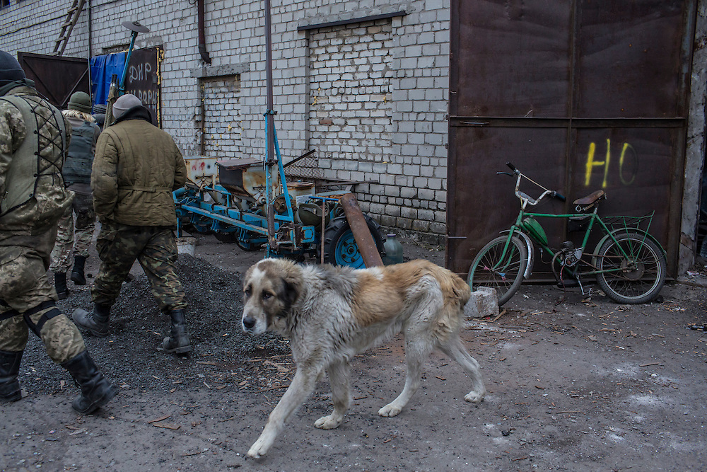 PISKY, UKRAINE - NOVEMBER 17, 2014: A dog resides alongside members of the Ukrainian army in an abandoned building being used as a camp in their fight against pro-Russia rebels for control of the Donetsk airport, in Pisky, Ukraine. CREDIT: Brendan Hoffman for The New York Times