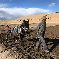A father and son plow their field in a remote part of Tibet, in western China. (Photo/Scott Dalton)