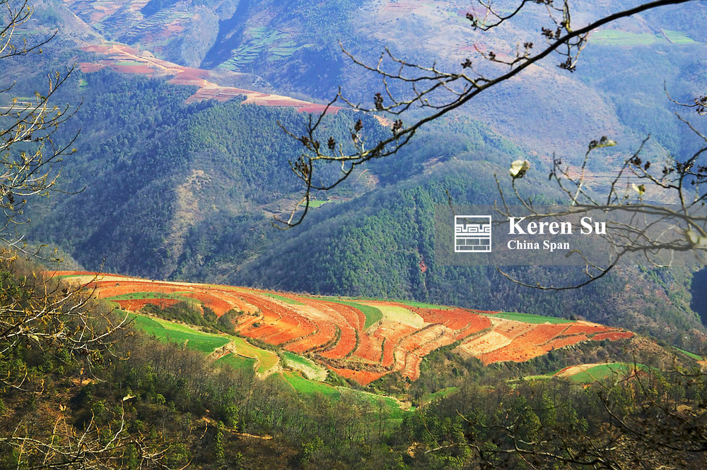 Farmland of green winter wheat and red soil in the mountain, North Yunnan, China