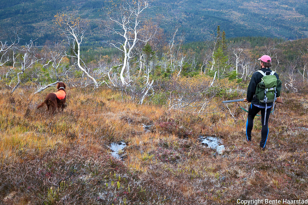 Hunting grouse in Norway.