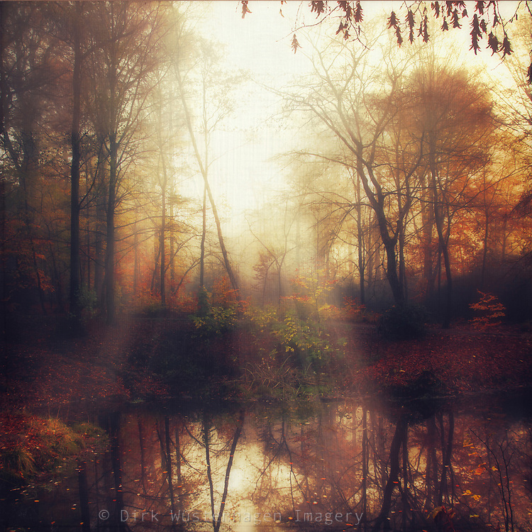 Pond in a forest on a foggy morning in fall - texturized photograph