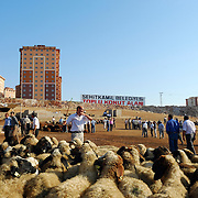 The Sunday morning sheep market in the city of Gaziantep