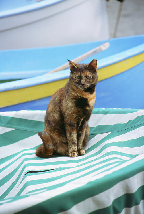 Cat sitting atop striped covered boat Cinque Terre Vernazza Italy