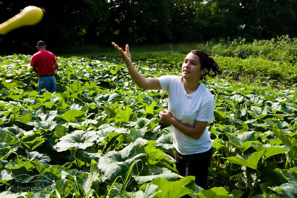 Community farmers harvest their plot at the Nuestras Raices farm in Holyoke, Massachuestts.