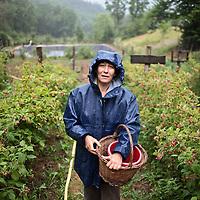 Veronique Gault est productrice de fruits et petits fruits rouges biologiques.
