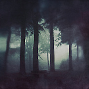 Misty forest scenery with an empty bench<br />