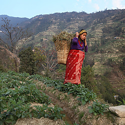 A nine-months pregnant Niruta Bahadur Balami, 14, carries grass to her family's farm for the animals to graze on in Kagati Village, Kathmandu Valley, Nepal on Jan. 30, 2007. Niruta moved in with the family of Durga Bahadur Balami, 17, and became pregnant when they were only engaged. In some circles of the more socially open Newar people, this is permissible. The harmful traditional practice of early marriage is common in Nepal. The Kagati village, a Newar community, is most will known for its propensity towards this practice. Many Hindu families believe blessings will come upon them if marry off their girls before their first menstruation.