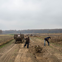 A couple of men prepare turnips for winter in fields just outside of Warsaw, Poland