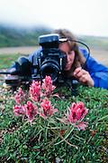 Alaska. Photographer Robin Brandt focuses on a macro image of the tundra flowers in Denali National park.