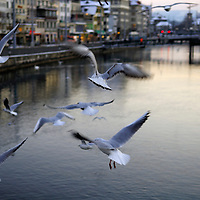 Seagulls over the Letten River in the centre of Zurich, Switzerland's biggest city.