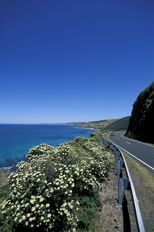 near Kennett River.Great Ocean Road.Victoria.Australia