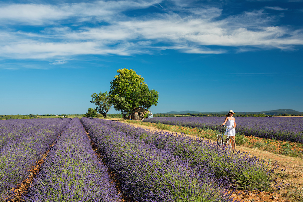 Europe, France, Provence, Valensole, girl with bike, MR