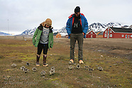 28: SVALBARD GOSLING WALKS