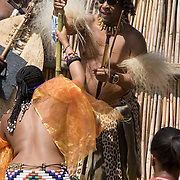 King Zwelethini accepts reeds from his daughters who led some 65,000 virgins in the stockade at the Zulu royal palace in Nongoma, KwaZulu Natal, South Africa Sept 8, 2007. Thousands of virgin girls attend the annual Reed Dance at the Enyokeni palace from which the Zulu King Zwelethini may choose a bride. The king is expected to choose a bride. Photo Greg Marinovich / Bloomberg News