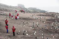 Chinese tourists in gentoo penguin colony, Pygoscelis papua, Antarctica