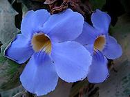 flower, wildflower, costa rica