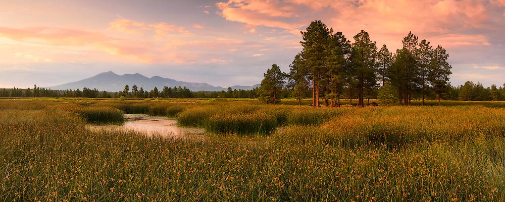 The Kachina Wetlands and San Francisco Peaks in Flagstaff, Arizona.