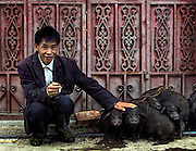 A Hani man with his pigs for sale at the market in Yuanyang, Yunnan, China.